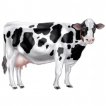 Jointed Cow Cutout: Black & White, Birthday