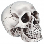 "Party Destination 6 "" Foam Skull"