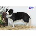 Hansa® Border Collie Standing