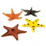 Assorted Starfish (8): Birthday