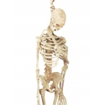 Forum Novelties 5 Feet Latex Skeleton
