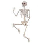 Pose And Hold Lifesize Skeleton Prop: Everyday