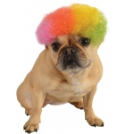 Afro Pet Wig Rainbow:Small